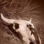 """Buffalo Skull and Yucca"" by aswendener"