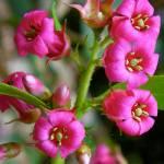 """Sweet Sunshine Flowers"" by vpicks"