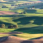 """Rolling Hills of the Palouse"" by dawilson"