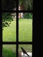 Windows of Chennai 1 - Lawn Crow