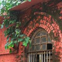 Windows of Chennai 3 - Brick Creepers