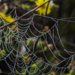 """Galveston - Morning Web"" by awsheffield"