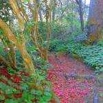 """On The Pathway To A Hidden Garden"" by artsandi"