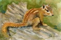 Animal Art | watercolor | Chipmunk Chap