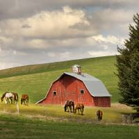 Red barn.horses.Washington_MG_4099. Art Prints & Posters by Sam Sherman