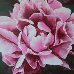 """Peony"" by RuthDriedger"