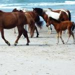 """Assateague 4"" by Kimmary"