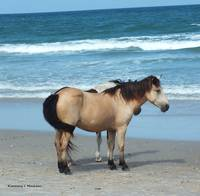 Assateague 3