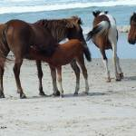 """Assateague 6"" by Kimmary"