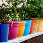 """colorful flower pots"" by globetrotter1"