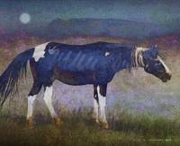 black horse at moonlight