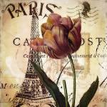 """Paris and tulip"" by lizmix"