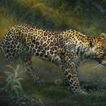 """silent passing leopard jungle path"" by rchristophervest"
