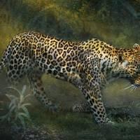 silent passing leopard jungle path Art Prints & Posters by r christopher vest