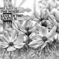 I Live In The Garden-2 Art Prints & Posters by Nina Bradica