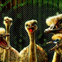 Ostrich Clan Art Prints & Posters by Emily Colosimo