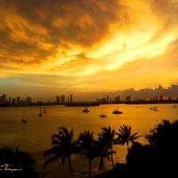Golden clouds over Miami Art Prints & Posters by John Thompson