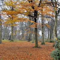 End of Autumn in England Art Prints & Posters by Joao Ponces de Carvalho