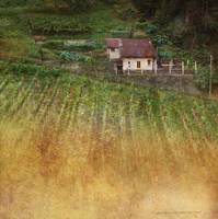 little house among vinyards