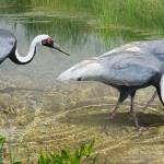 """white naped cranes forage"" by rchristophervest"