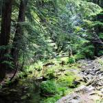 """""""Covered Creek_9509"""" by NikkiLeck"""