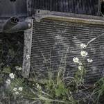 """Daisies and Old Car Grill"" by SederquistPhotography"