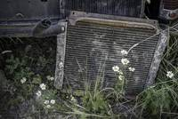 Daisies and Old Car Grill