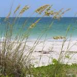 """""""Beach through Sea Oats"""" by Groecar"""