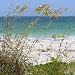 """Beach through Sea Oats"" by Groecar"
