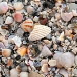 """Beautiful Broken Shells"" by Groecar"
