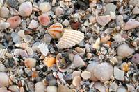 Beautiful Broken Shells
