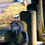 """Squirrel on post"" by globetrotter1"
