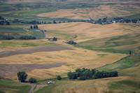 Steptoe Butte View