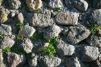 Rock Wall with Plants