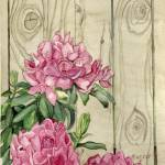 """Pink Rhododendron With Knotty Wood Fence"" by ClotheslineArt"