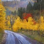 """wet road peak of autumn"" by rchristophervest"