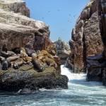 """""""A Visit to Las Islas Ballestas"""" by PaulCoco"""