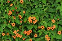 Orange Flowers on a Green Plant