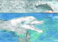 Dolphin Imposed