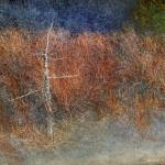 """grey and green forest textures abstract"" by rchristophervest"
