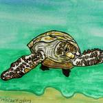 """sea turtle  t0013"" by wgilroy"
