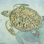 """sea turtle  t0022"" by wgilroy"