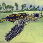 """sea turtle  t0027"" by wgilroy"