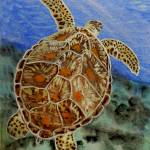 """sea turtle  t0029"" by wgilroy"