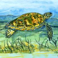 sea turtle Art Prints & Posters by whitey gilroy