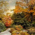 """Japanese Rock Garden"" by JessicaJenney"