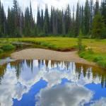 """Little Creek In The Back Country"" by artsandi"