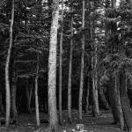 """Forest Tree Views in Black and White"" by lightningman"