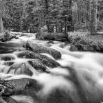 """Roosevelt National Forest Stream Black and White"" by lightningman"