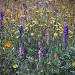 """Seattle Wildflowers"" by patriciaschnepf"